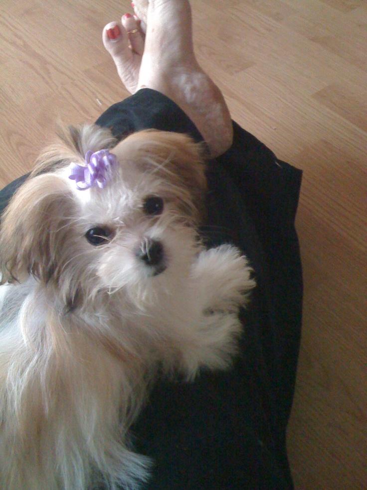 MI Ki Dogs and Puppies