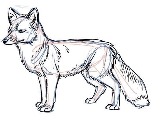 How To Draw E Fox