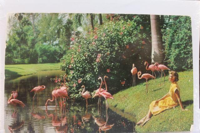Florida Fl Sarasota Jungle Gardens Postcard Old Vintage