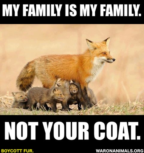 Image result for anti animal cruelty quotes