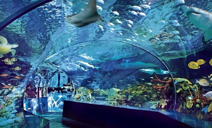 Ripley 39 S Aquarium Tennessee Favorite Places Spaces
