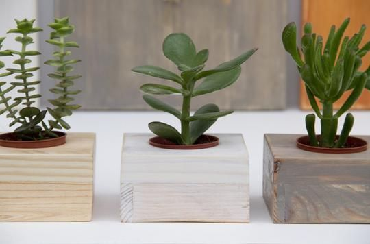 Custom succulent wooden cactus planter by art glamour for Wooden cactus planter
