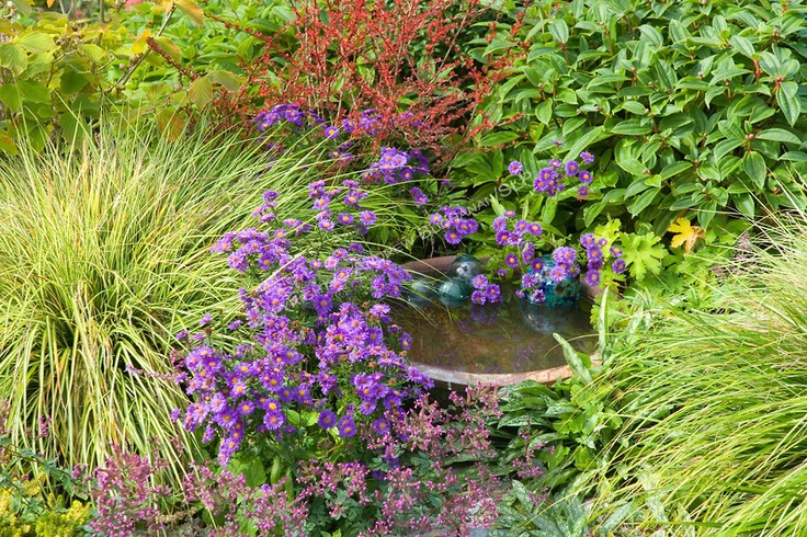 Pin by jennifer slipp on garden goodness pinterest for Hearty low maintenance plants