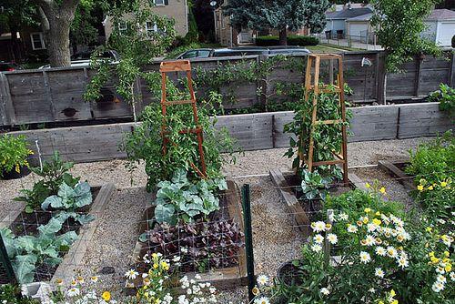 Urban Farm Backyard Ideas : Urban Farming