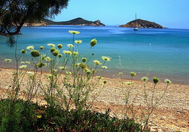 beach with wild flowers patmos pinterest