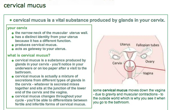 Ovulation cervical mucus