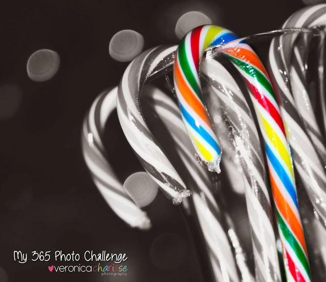 My 365 Photo Challenge 2013 Challenge (Practice) 17/365 Candy Canes