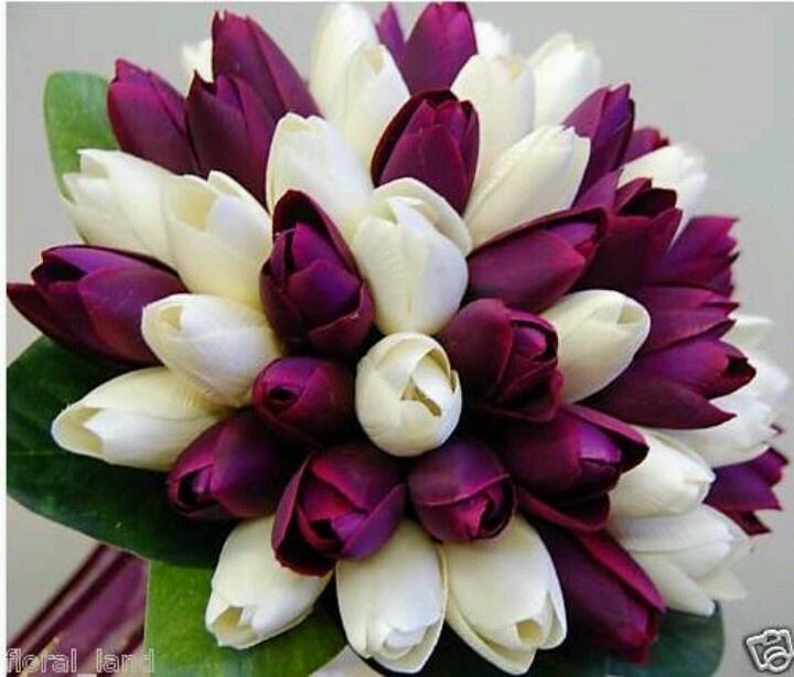 White and purple tulipsPurple And White Tulips