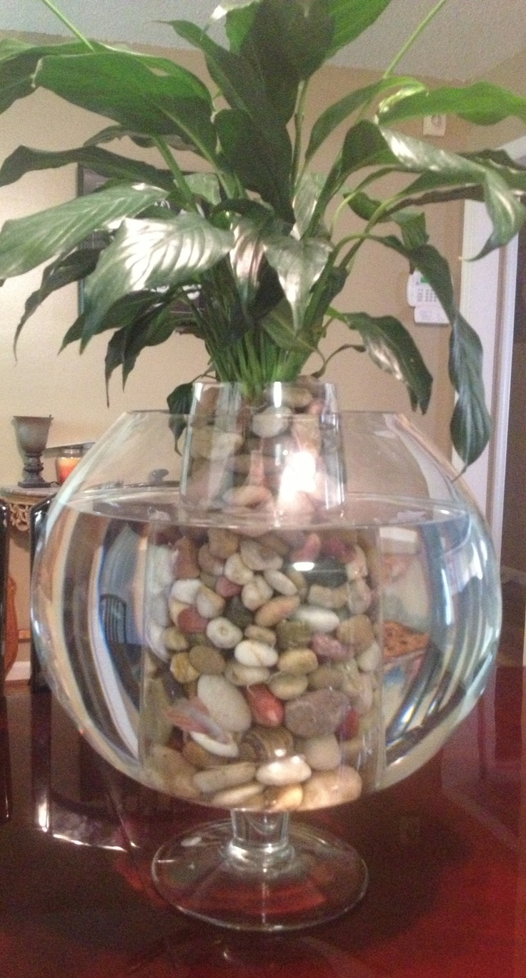 Beta bowl plants terrariums and aquatic gardens for Fish bowl with plant on top