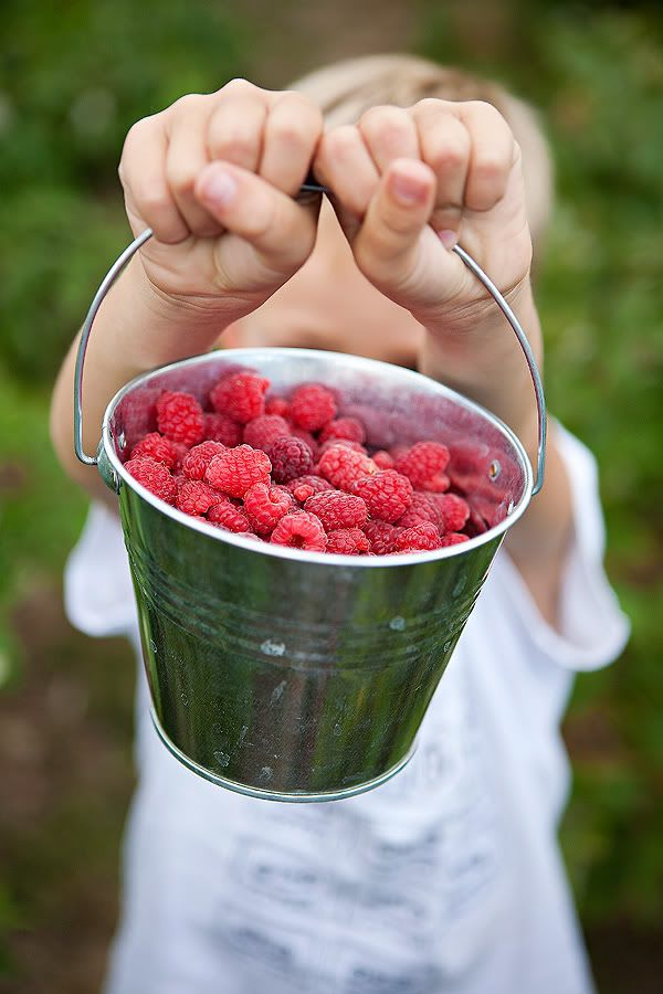 Gathering a bucket of berries...