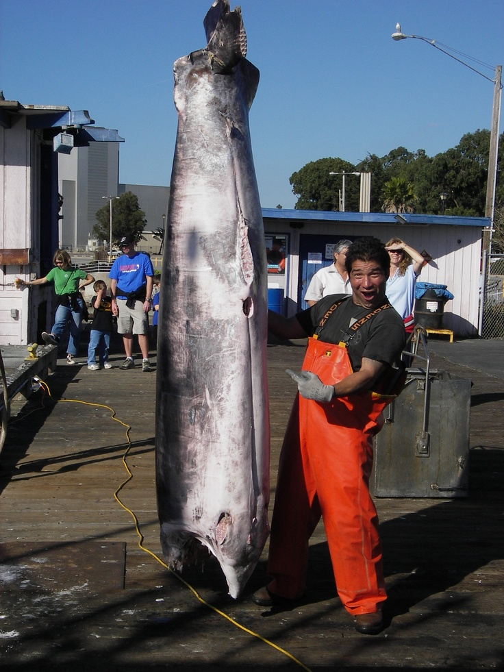 Fresh california swordfish giovanni 39 s fresh fish market in for Morro bay fishing