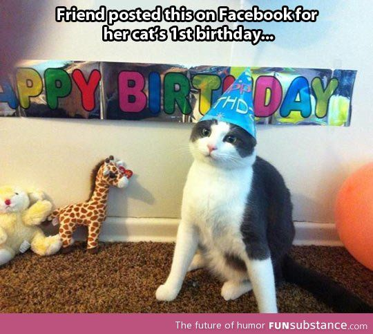 A Cat's First Birthday