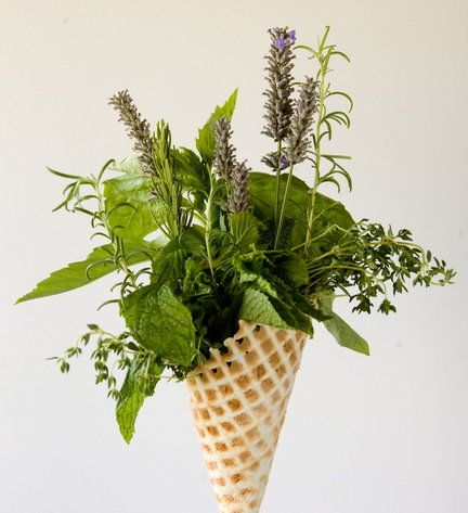 mint ice cream (plus other ice creams that incorporate fresh herbs ...