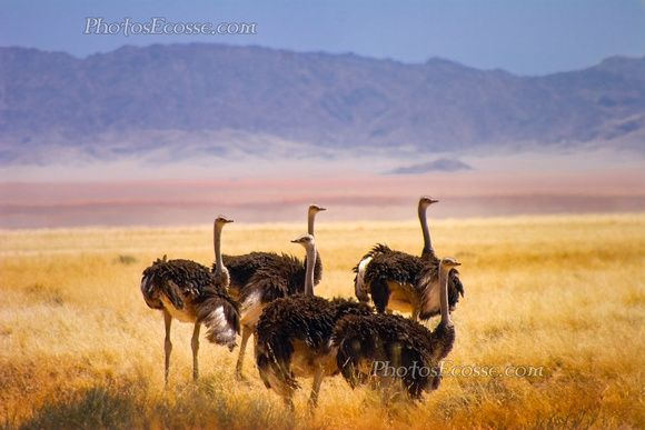 Pin By Santuccio Album On Deserts In Africa Pinterest