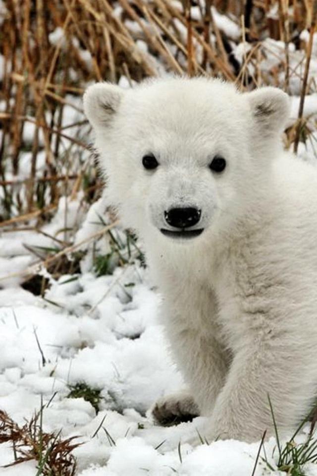 cute baby polar bear | Animals: Adorable & Amazing Babies ...