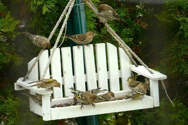 Are not swinging bird feeders