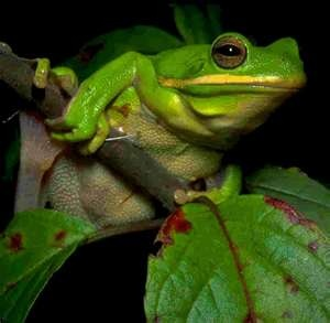 frogs are cool | Bright Bright Green | Pinterest