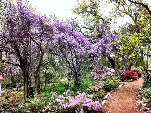 Austin Botanical Gardens In Spring My Life And What