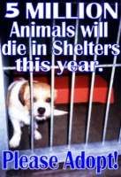 Free and Low Cost Spay and Neuter listed by US State  Please... Adopt.  Rescue.  Shelter. Foster.  Transport. DONATE.  Do something that will save lives!