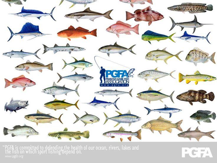 List of Sea Animals AZ  Owlcation