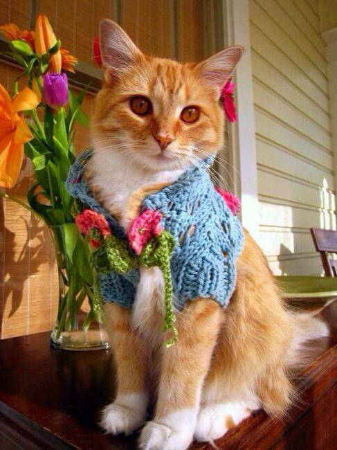 Cat in sweater cats in sweaters pinterest - Knitted cat sweater pattern ...