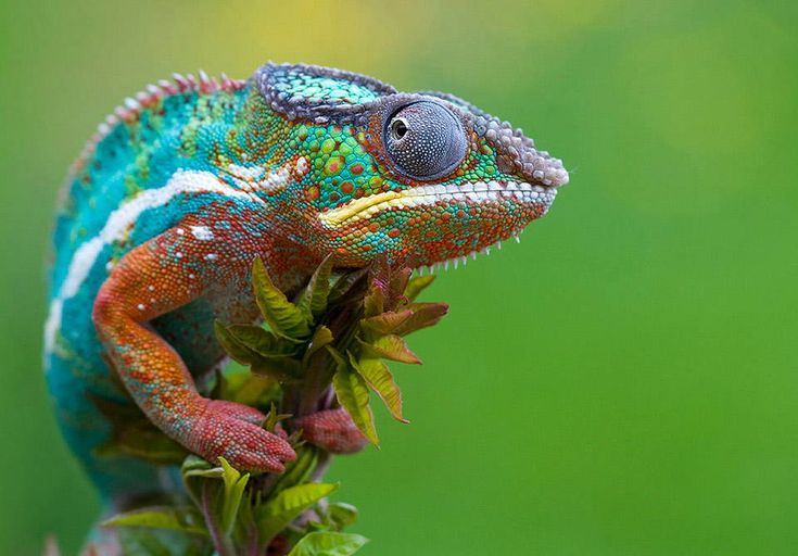 what a colorful lizard