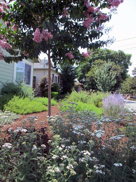 Pin By Dawne Dale Cerda On Drought Tolerant Landscapes
