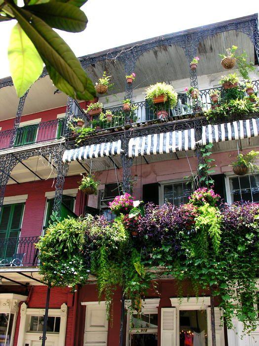 Balcony garden plant kingdom pinterest for Balcony plants