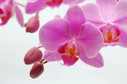Milwaukee Wedding Florist Kuntum Flo Design Pinterest