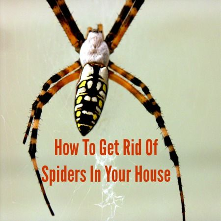 How to get rid of spiders in your home for How to get rid of spiders in house