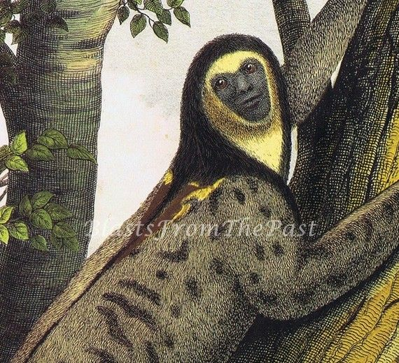 monkey sloth