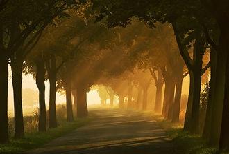 Autumn road...  © Krzysztof Browko