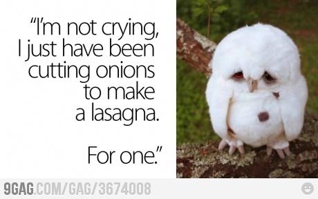 Since you like owls!