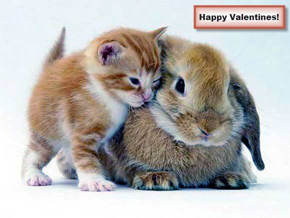 valentine's day kitten pictures