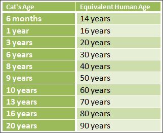 Cat Years Human Equivalent