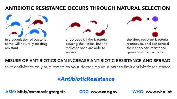 antibiotic resistance essay papers