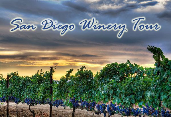 Best Winery Tour In San Diego
