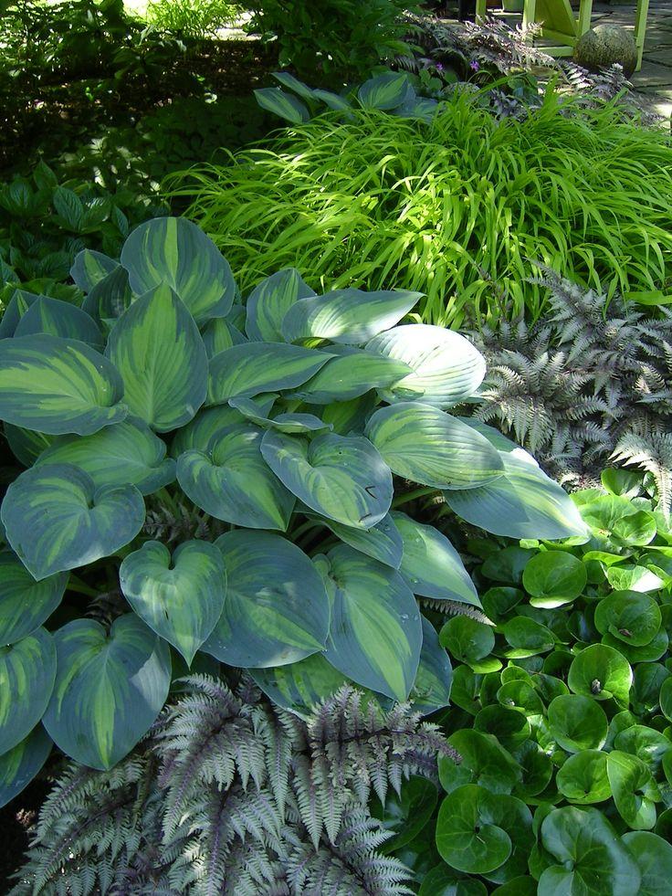 Shade hostas hostas and ferns pinterest for Plants found in japanese gardens