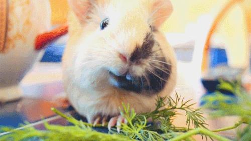 Cute piggy eating - photo#20