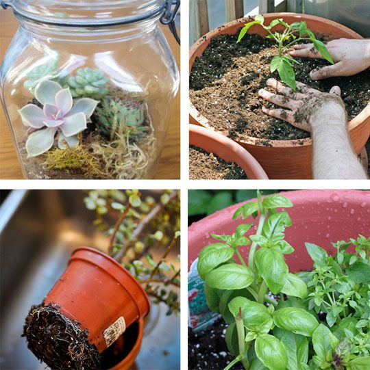 7 great container garden how to's.