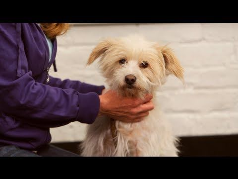 Watch 10 Dog-Training Tricks from the Dog Whisperer That Will Change Your Life video