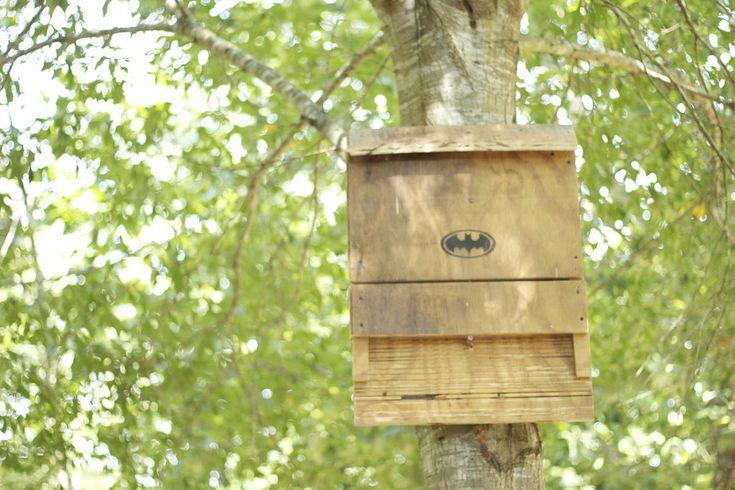 Bat House Plans Homeschool Stuff Pinterest