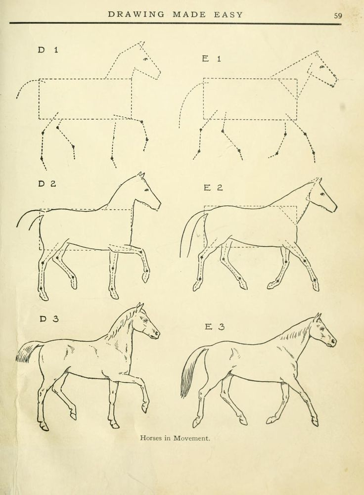 how to draw a horse easy