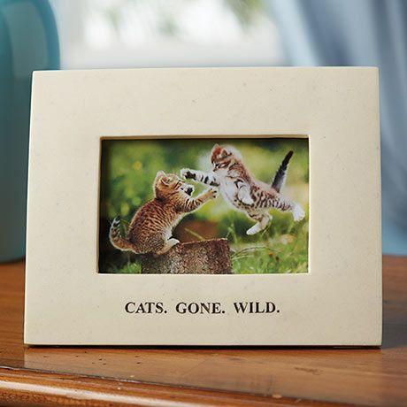 cat gone wild