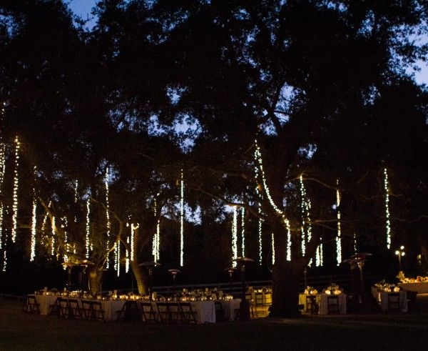 Long string lights hanging in the trees Outdoors Pinterest