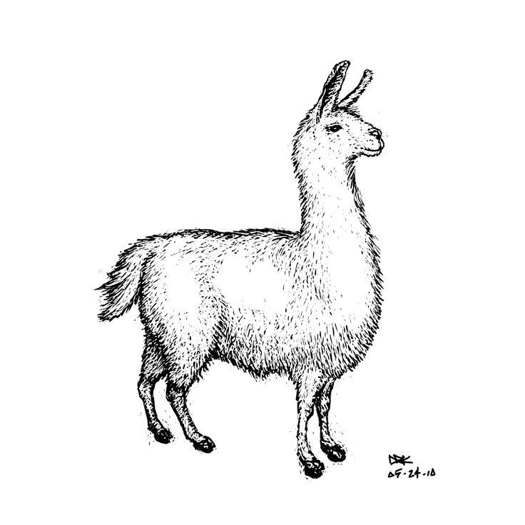 Llama Drawing Image