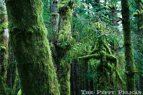 pacific northwest forest - photo #37