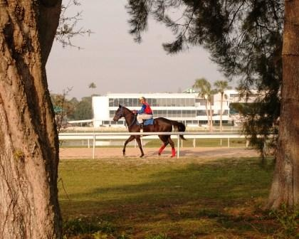 Morning Workouts at Tampa Bay Downs!