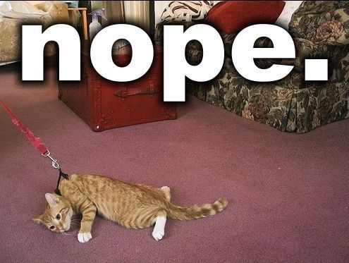 We had a cat that reacted just like this to the leash. Stubborn, protesting feline.