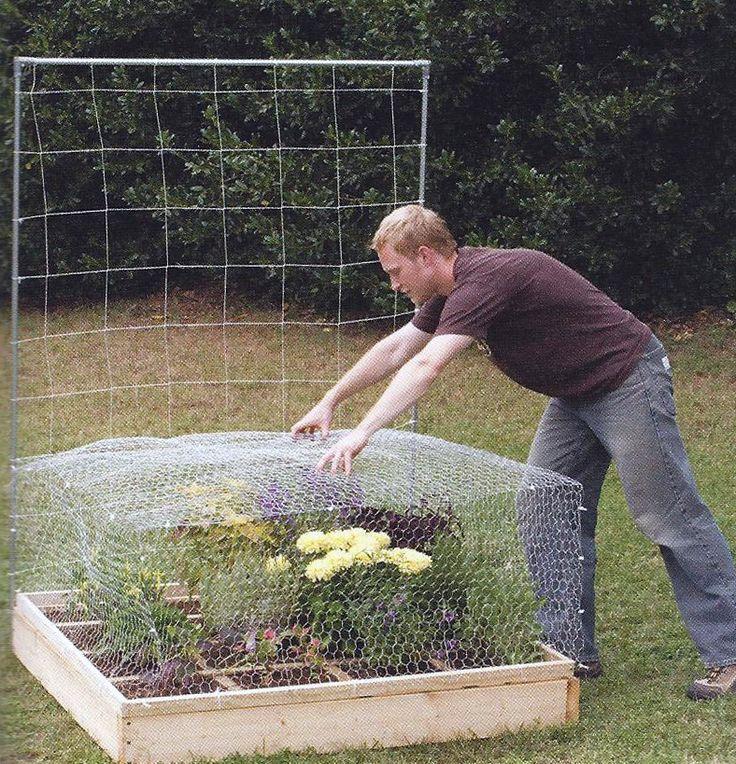 Chicken Wire Garden Cage For The Home Pinterest